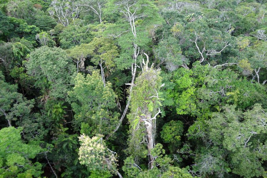 Australie: le Skyrail du Queensland