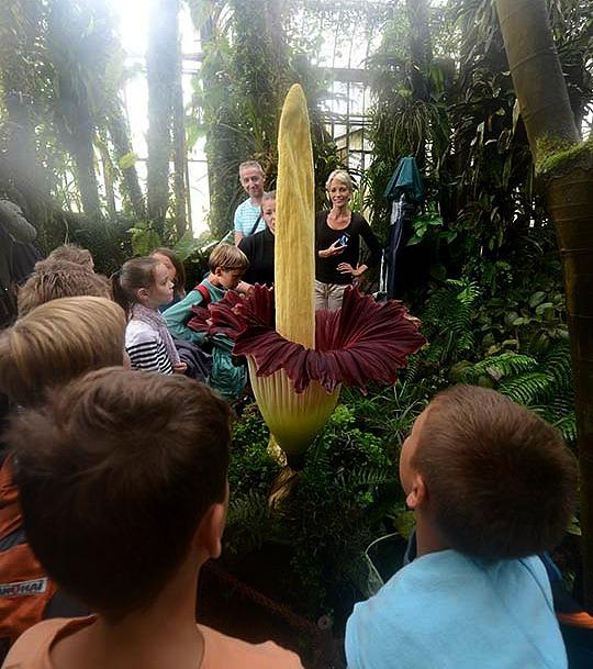 La plus grande fleur du monde | Pichon Voyageur