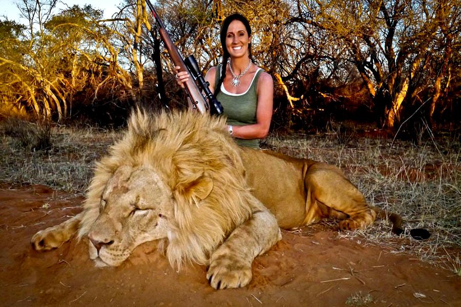 élevage de lions