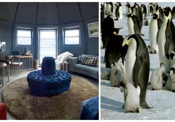 Tourisme en Antarctique