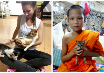Animaux Luang Prabang
