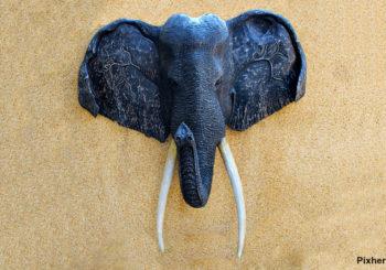 éléphants au Botswana