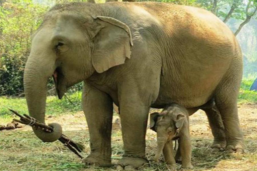 Thaïlande: aujourd'hui, journée nationale de l'éléphant ...