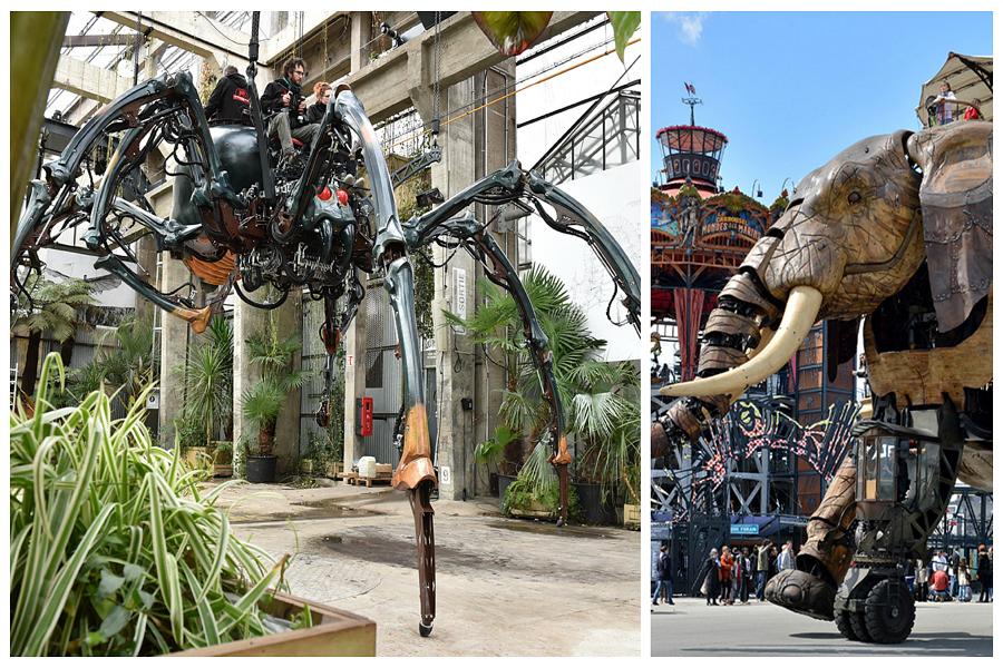 Araignée géante à Nantes