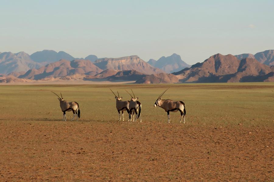 Afrique : VIDEO Namibie (Namib)