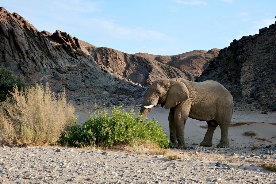 Afrique : VIDEO Namibie (éléphants)