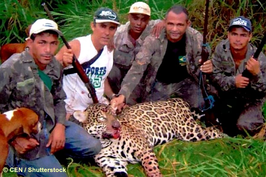 Brésil : horrible braconnage