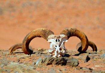 Afrique, Namibie