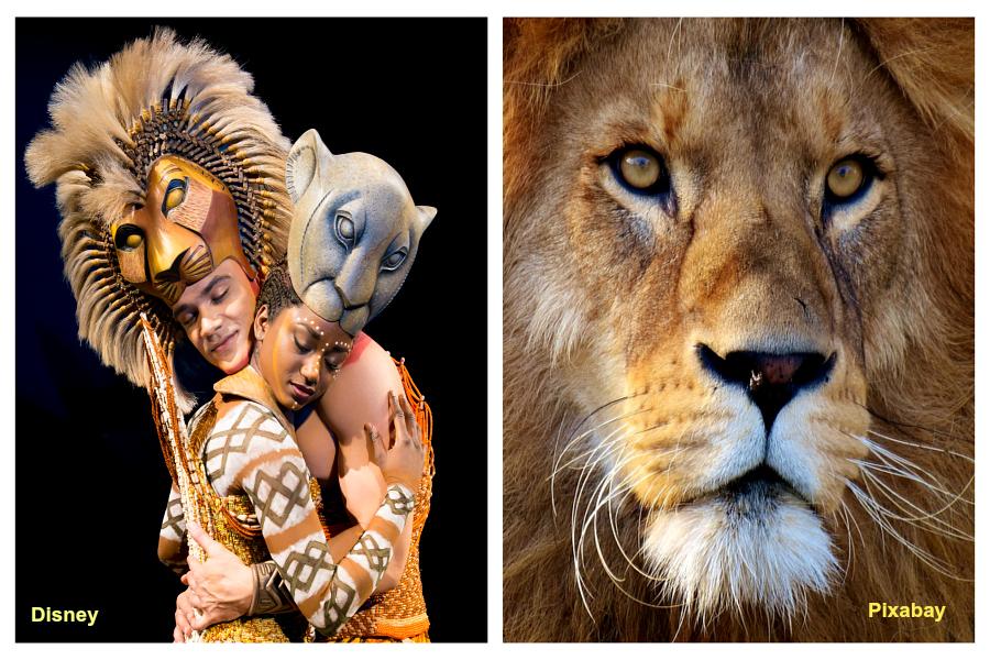 Le Roi Lion fêté à Londres…et un geste pour l'espèce