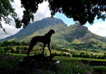 Vignobles Afrique