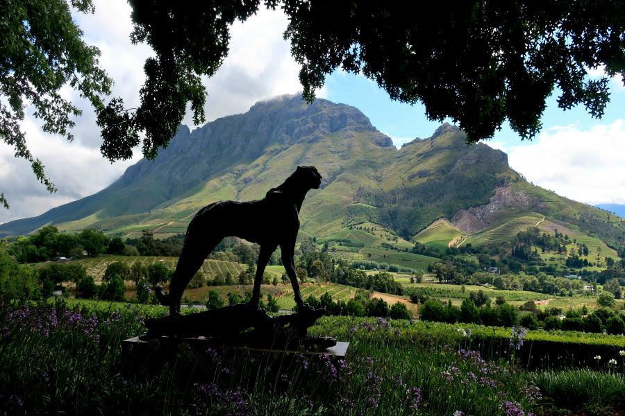 Afrique du Sud : VIDEO vignobles