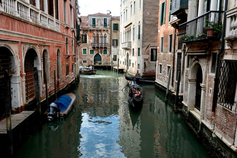 Venise : les canaux rendus aux dauphins ?