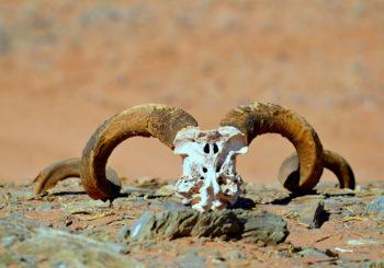 Côte des Squelettes Namibie