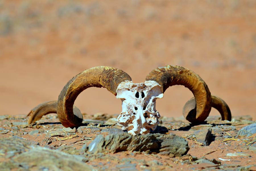 Afrique : VIDEO Namibie (Côte des Squelettes)