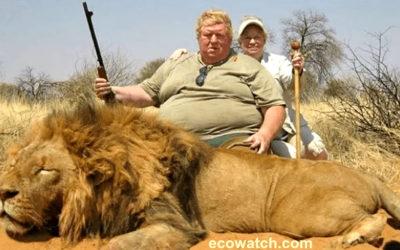 Elevages de lions pour trophées de chasse