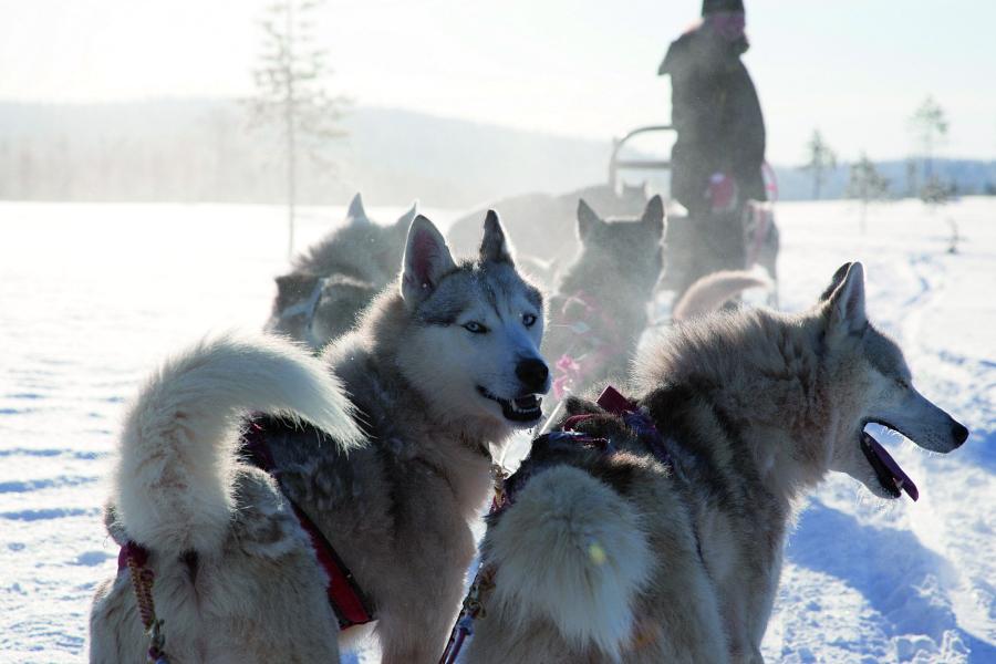 Laponie : vacances d'hiver