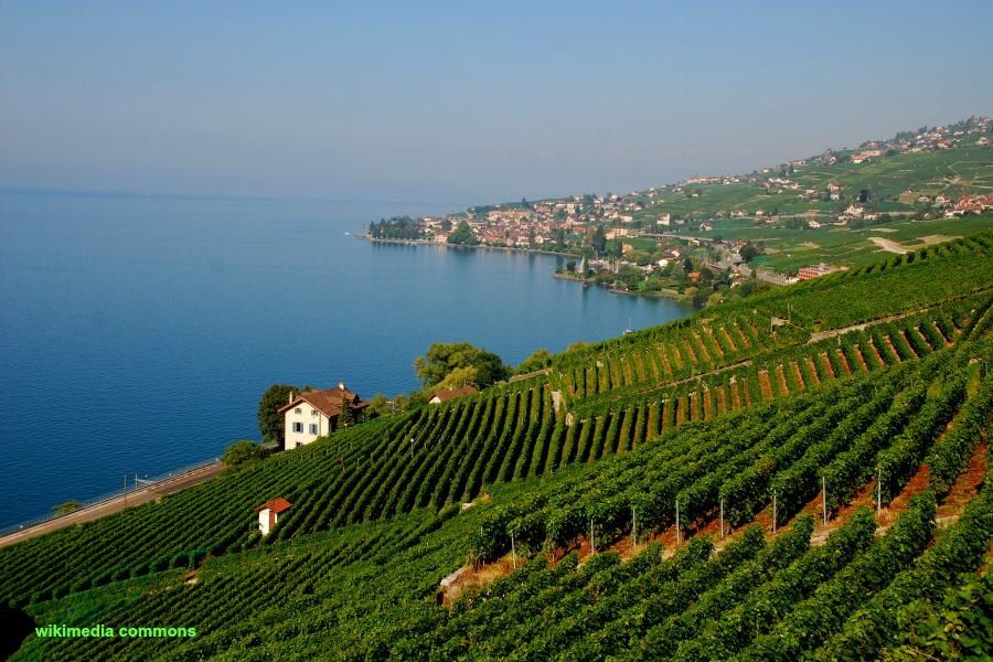 Suisse : VIDEO le vignoble de Lavaux