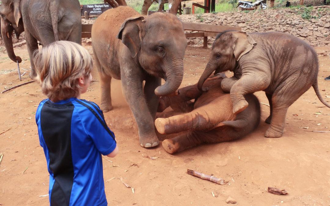 Covid-19 : ces animaux menacés par la chute du tourisme
