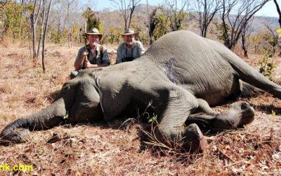 Afrique : éléphants proposés à la chasse