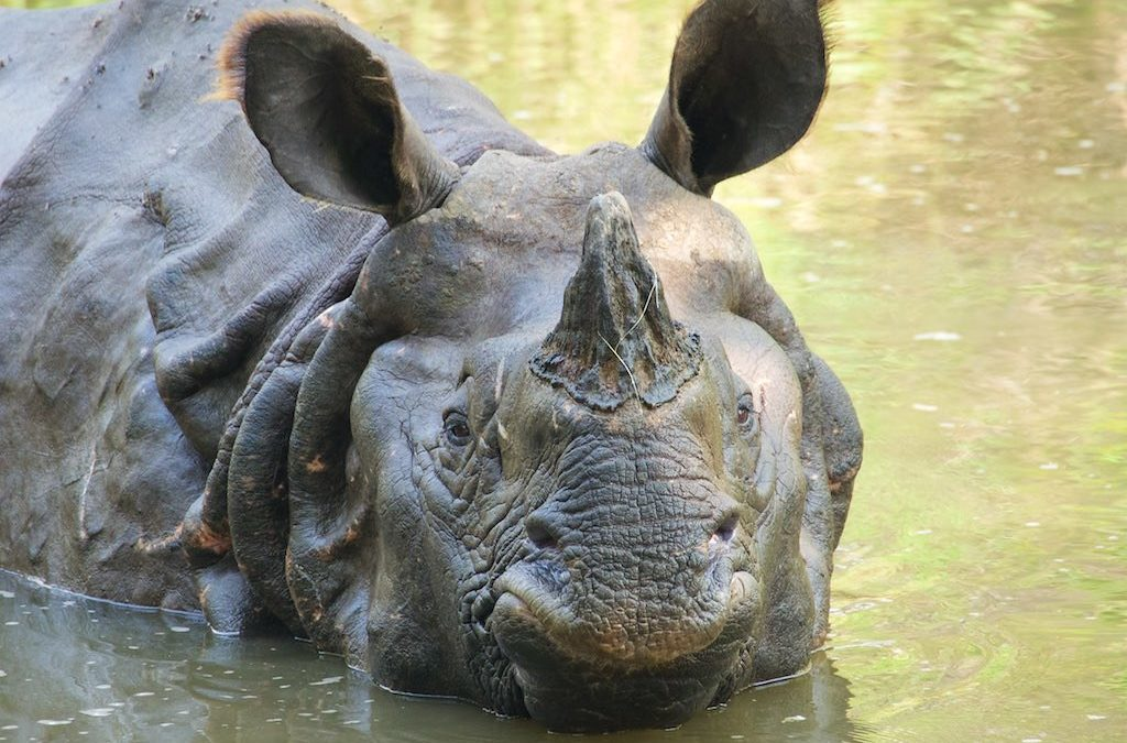 Voyager au Népal pour les rhinocéros
