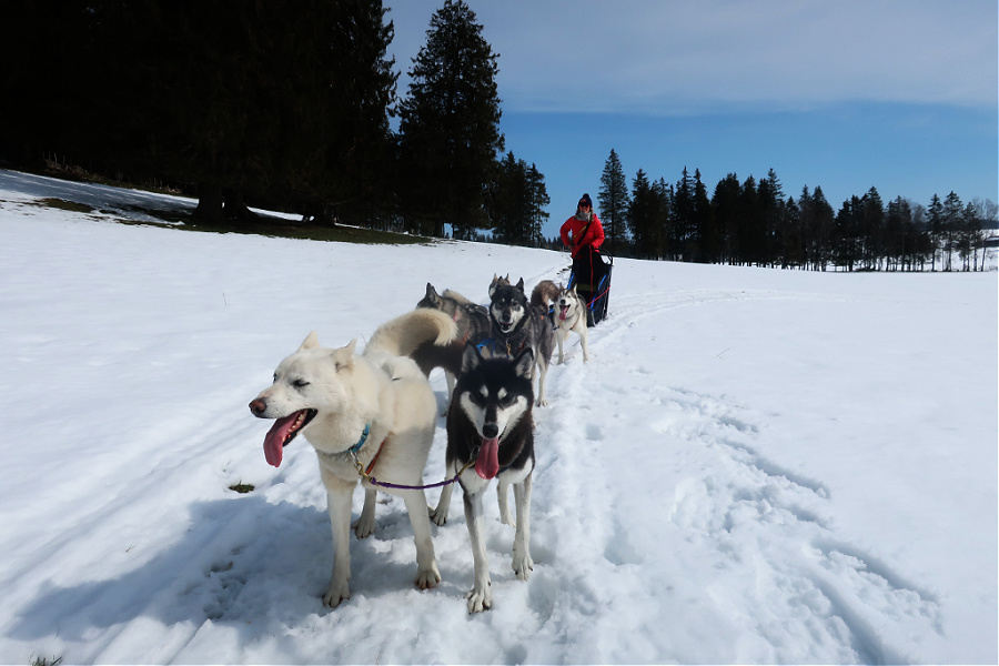 Suisse : VIDEO Jura (huskies)